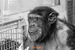 Animals_019