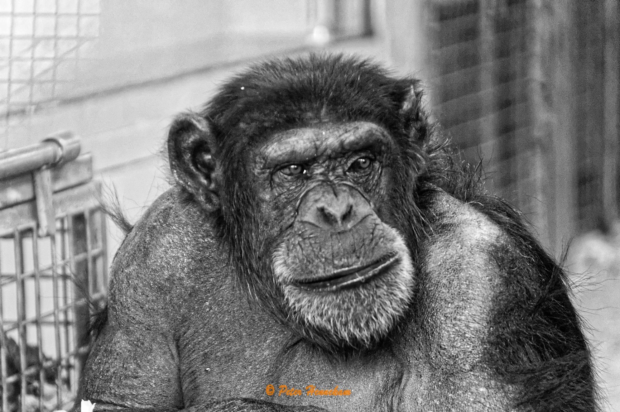 Animals_020