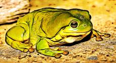 Frog_Trip 106.jpg