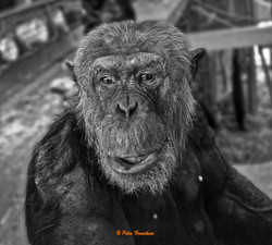 Animals_015