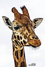 Giraf _NOR75862c.jpg
