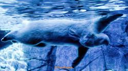 Animals_064