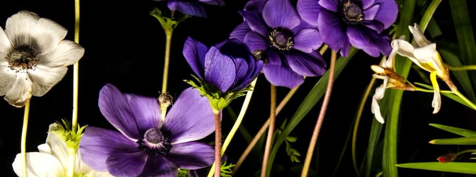 Purple Flowers.mp4