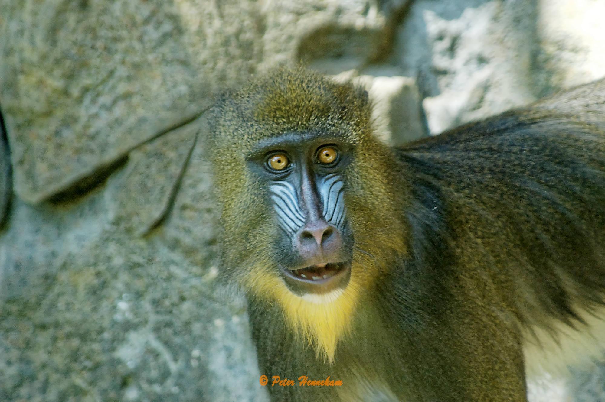 Animals_035