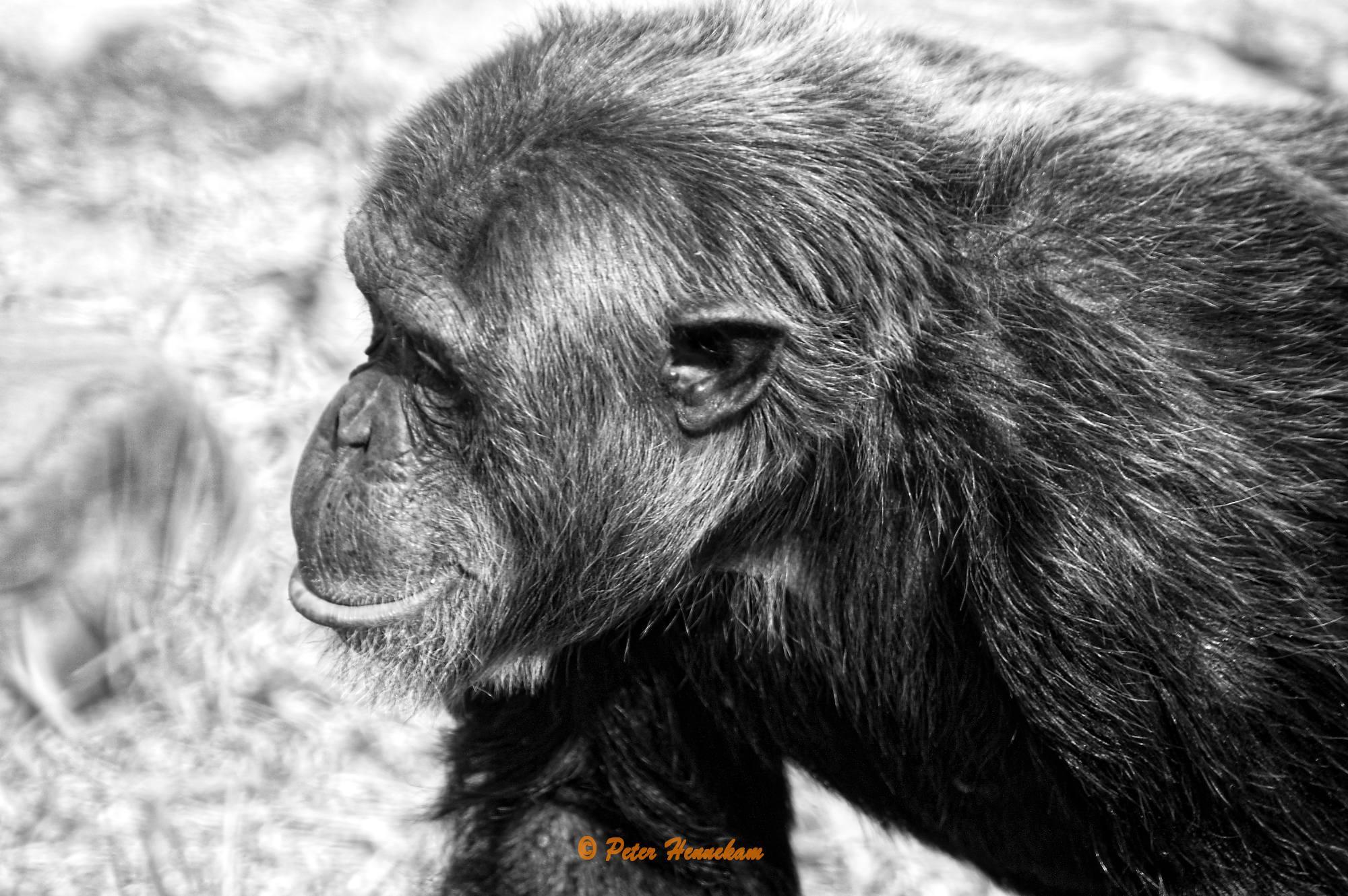 Animals_052