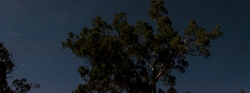 Flinders_stars moon on tree.mp4