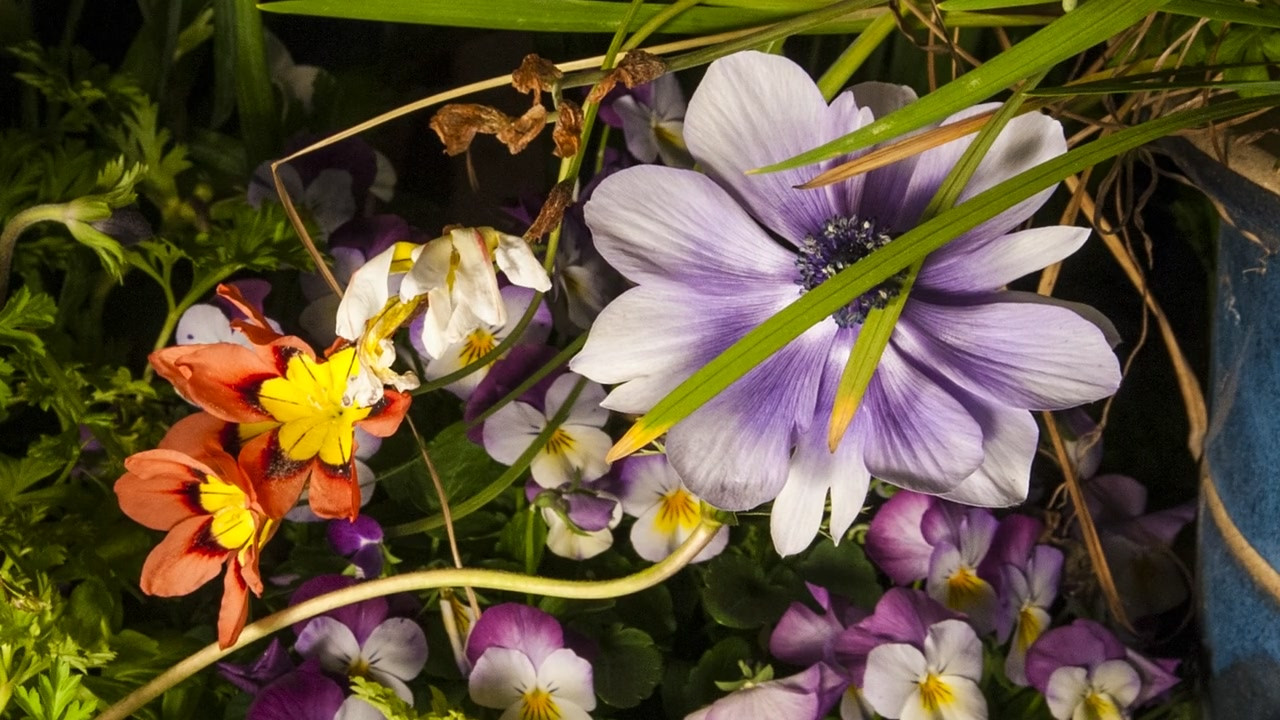 Big_Flower (1).mp4
