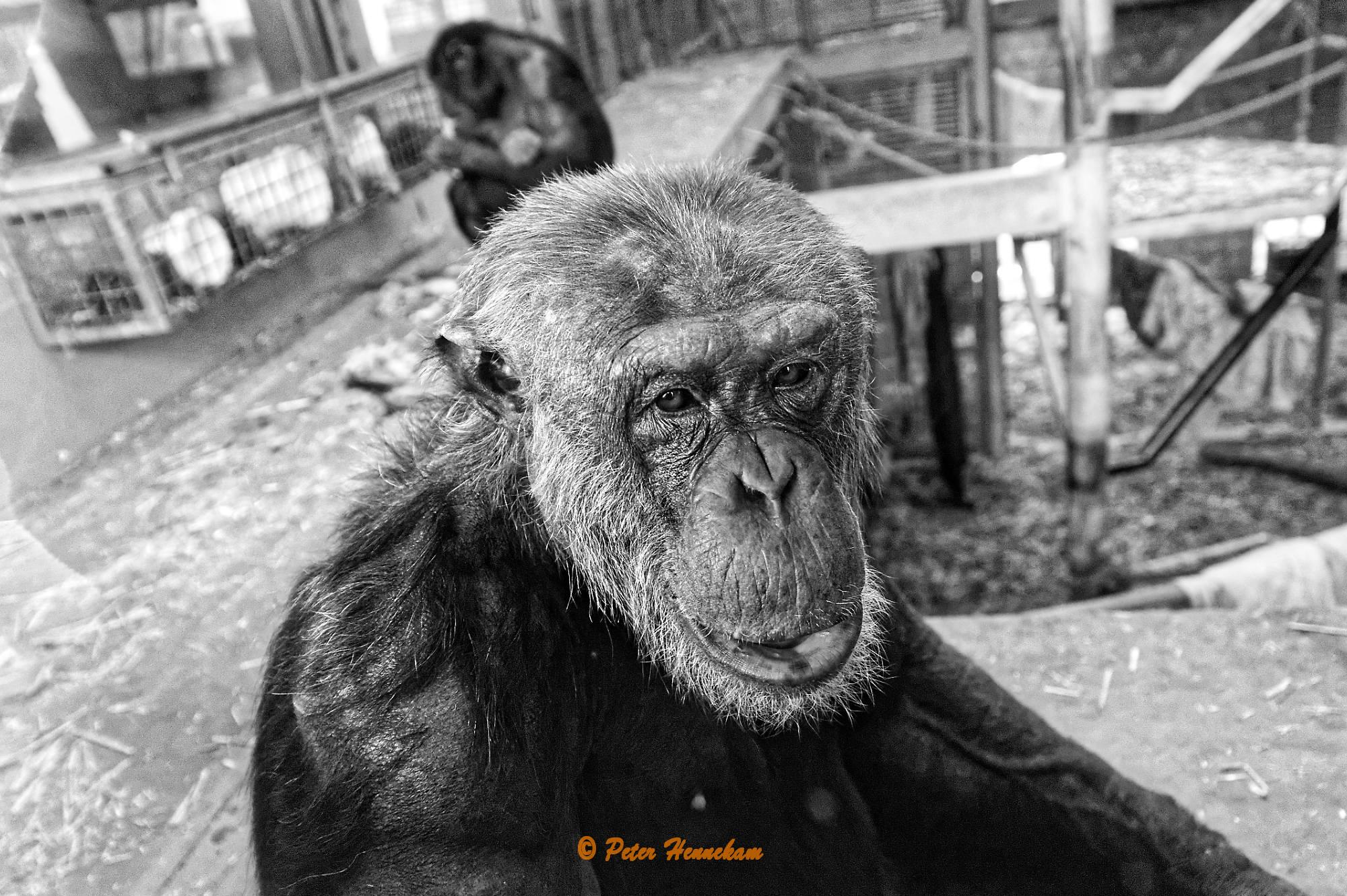 Animals_016