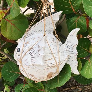 Coconut Fish In Net