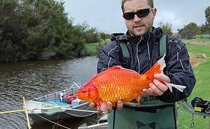 Peixes de aquário despejados em rios estão virando mutantes De2b8c_6d7cf0e4622f441facae5d3be3706023%7Emv2