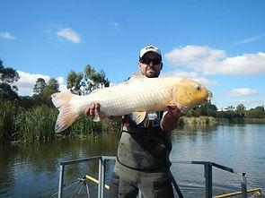 Peixes de aquário despejados em rios estão virando mutantes De2b8c_dd4ffc556e9a4e63ab2d9e005105340e%7Emv2