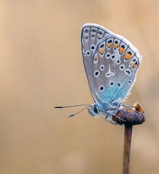 butterfly-2712149_1920.jpg