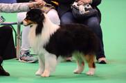 chiens-Berger-Australien-ccd46c40-45c5-1