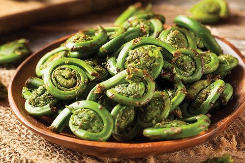 Culinary fiddle head ferns