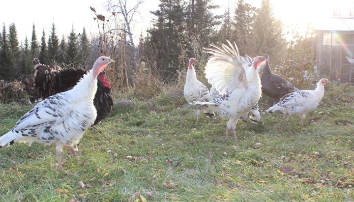 November Farm Updates
