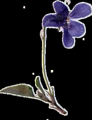 violette%25202_edited_edited.png
