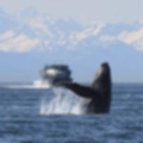 humpback-1132769__340.jpg