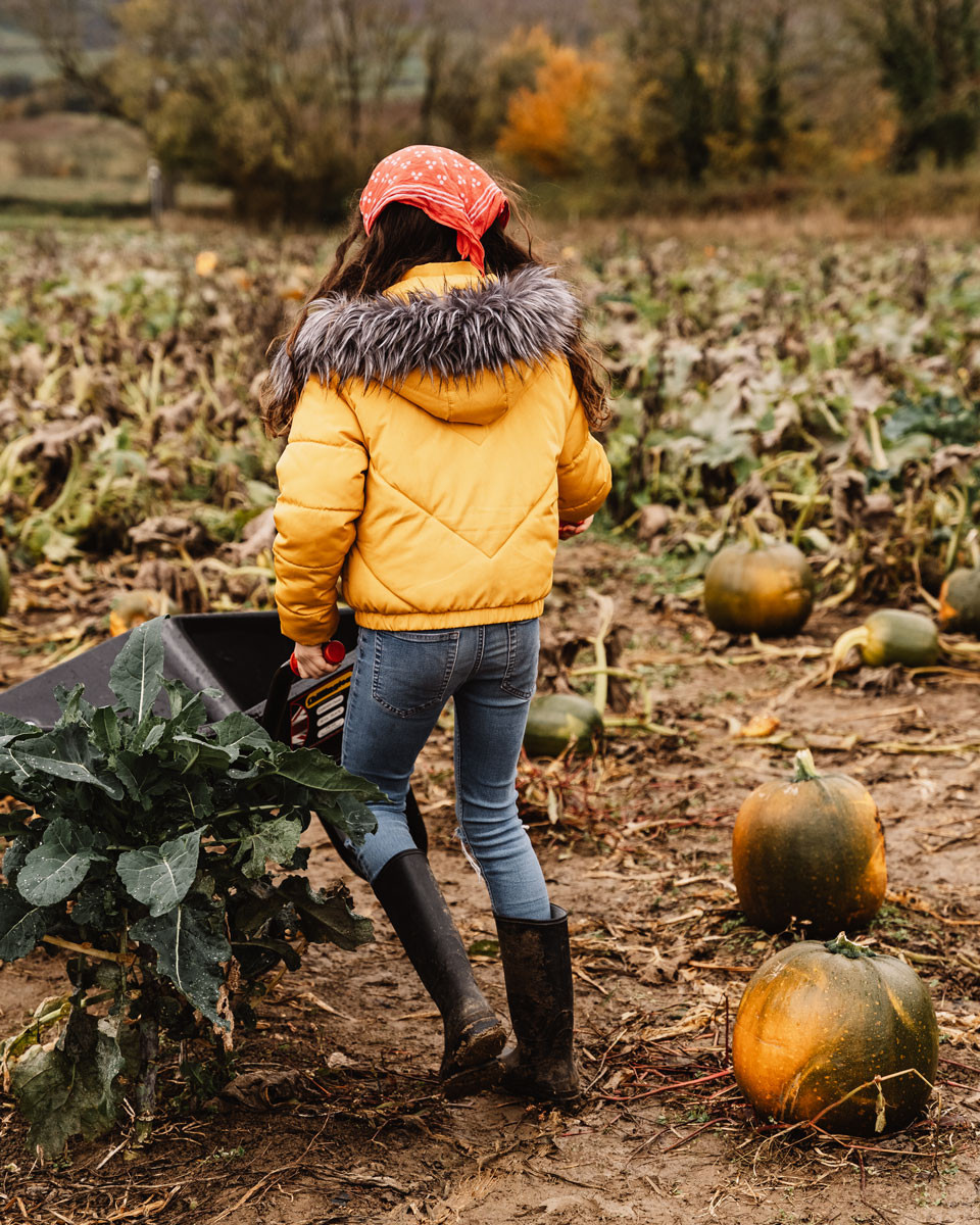 Pumpkin picking in Rutland