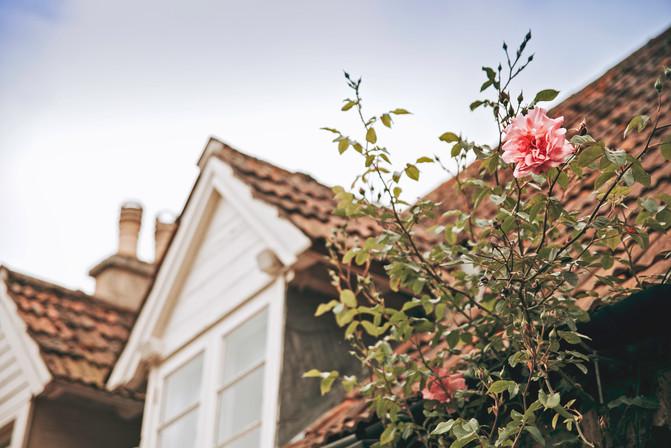 IMG_7717-Roof Rose.jpg