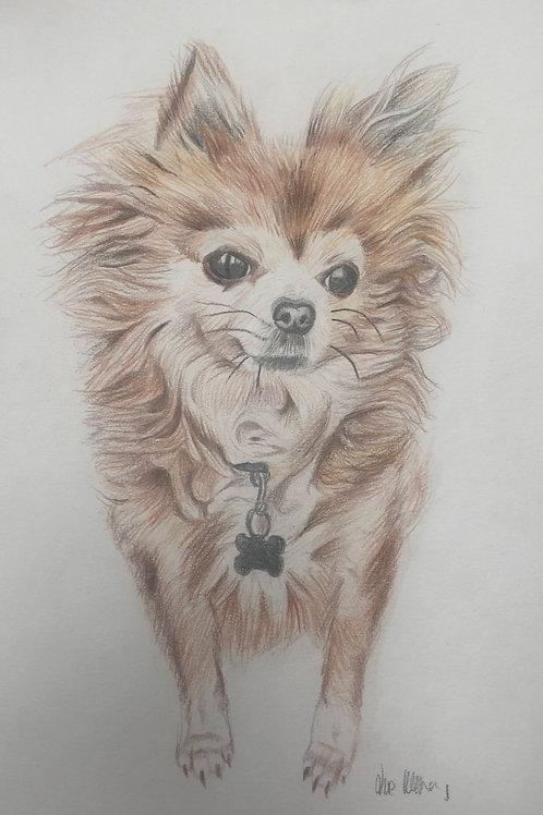 Colour Pet Portrait A4