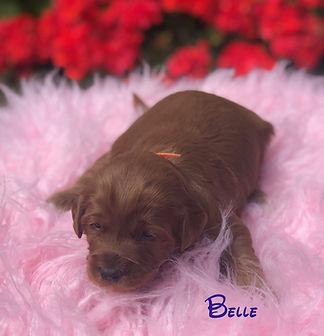 Belle 2.5 wks.jpg