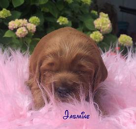 Jasmine 2 wks.jpg