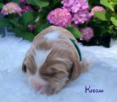 Keegan 2 wks.jpg