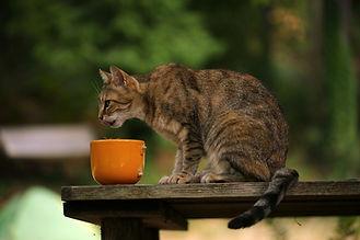 cat-4412839_1280.jpg