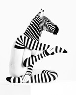 'Zebra Yoga' by Gerald Gribbon ( 14 marks )