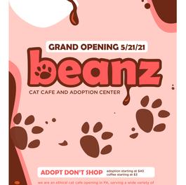 Cat cafe flyer design