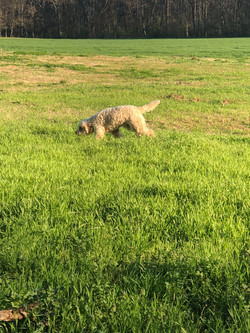 Stella playing in the pasture