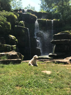 Pippa loves the waterfall