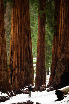 LH_Sequoia + Joshua Tree_63.jpg