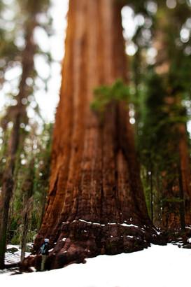LH_Sequoia + Joshua Tree_60.jpg