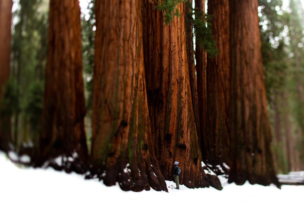 LH_Sequoia + Joshua Tree_70.jpg