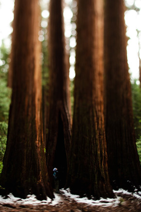 LH_Sequoia + Joshua Tree_41.jpg