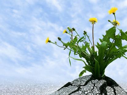 Resiliência, a chave para o sucesso