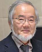 Ohsumi Yoshinori