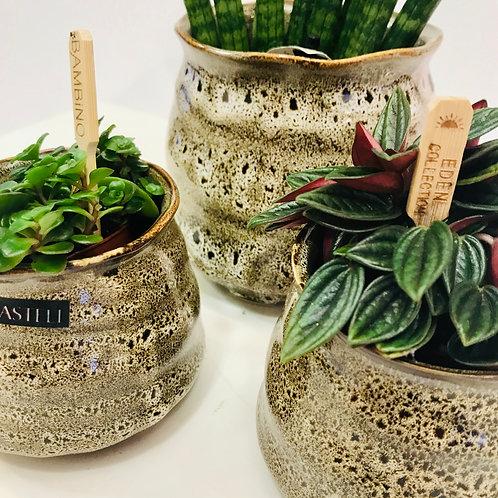 Decoratieve combinatie van groen en Rastelli