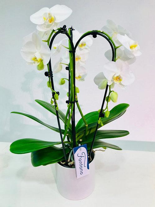 Orchidee (fontein) in kwalitatieve pot DM Depot
