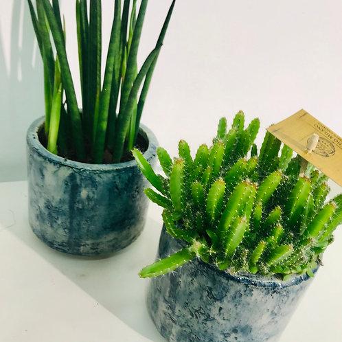 Duo artinasale potten DM Depot blauw met groen