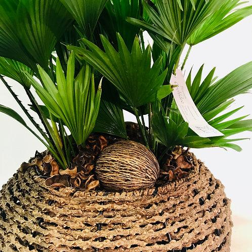 Plant in een leuke combinatie met mand
