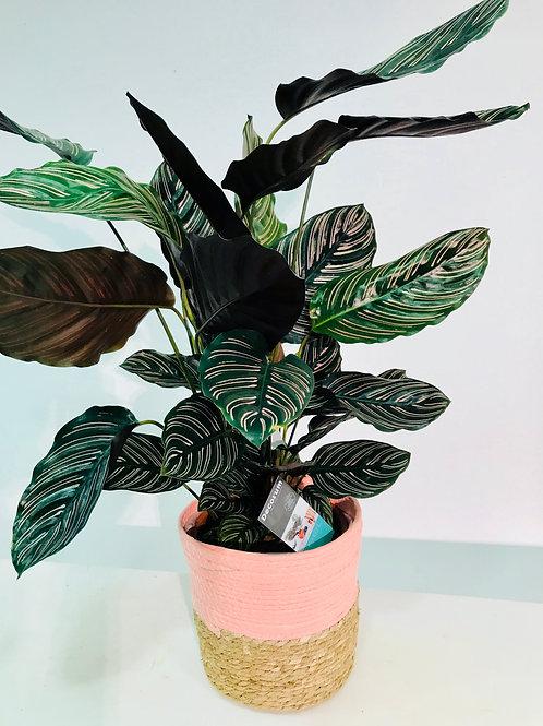 Leuke plant met bijpassende mand