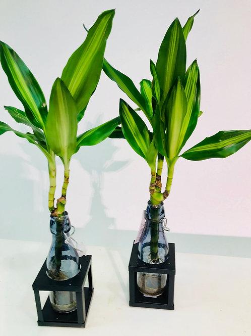 Unieke plantencreatie (prijs per stuk)