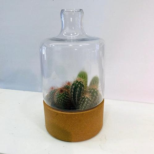 Hippe vaas met kurk, gevuld met cactussen