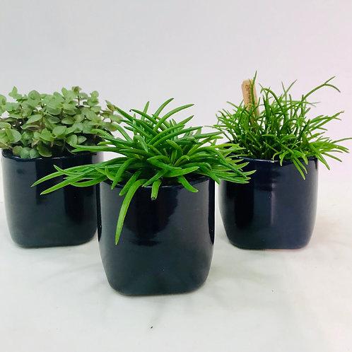 Klassevol trio van DM Depot met groen. (Diep blauw)