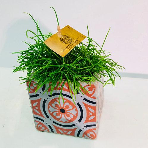 Leuke plant met bijpassende decoratieve pot (SERAX)