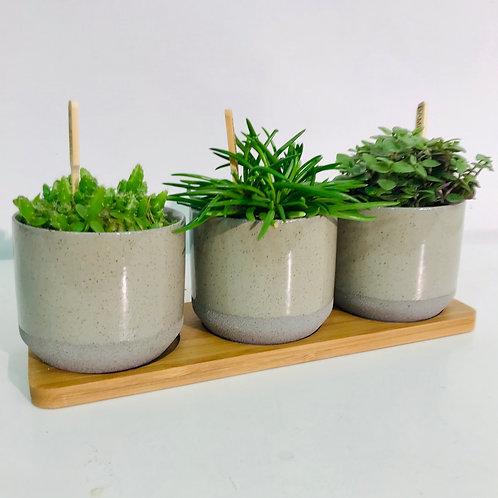 Origineel trio van groen (grijs)