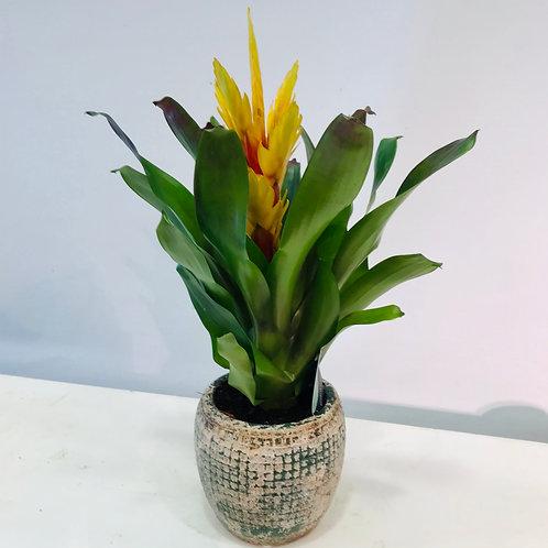 Gele plant in pot van SERAX