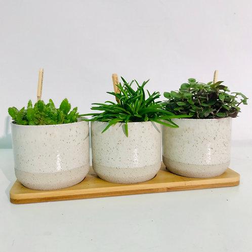 Origineel trio van groen (wit)